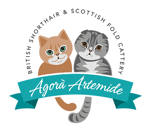 Allevamento Scottish Fold e British Shorthair