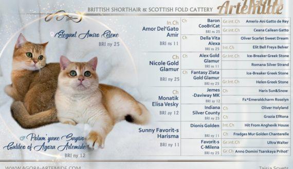british golden shell